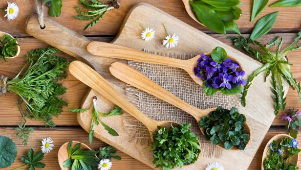 Fresh wild edible spring herbs on wooden spoons