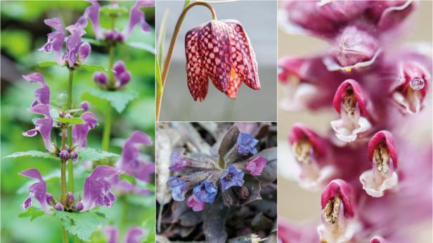 wilde Frühlingsblumen in Rosa