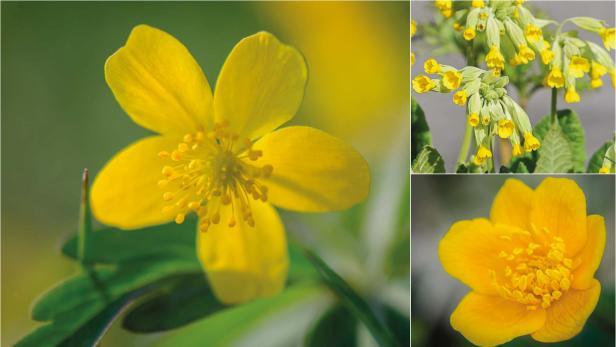 gelbe Wildblumen im Frühling