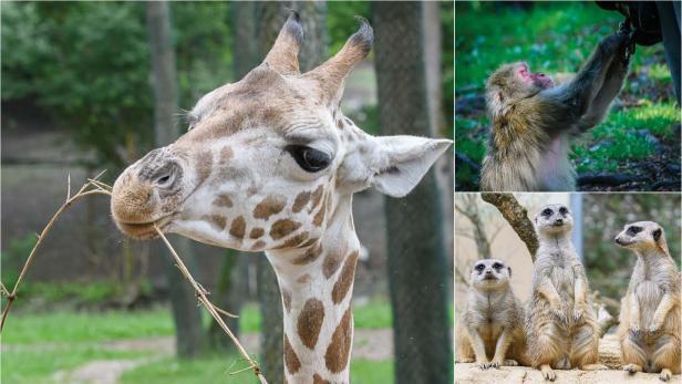 Tierparks, Zoos, Wildparks in Österreich